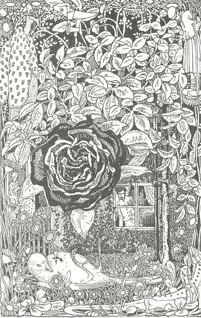 die nachtigall und die rose m rchenatlas. Black Bedroom Furniture Sets. Home Design Ideas